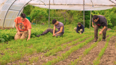 Photo of WWOOF – World Wide Opportunities on Organic Farms