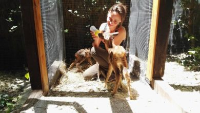 Photo of Call for ESC volunteers: Animal shelter in Italy